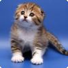 Каким кошкам для продолжения рода нужно скрещиваться с другой породой?