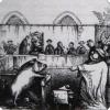 Когда в судах обвиняемыми могли стать не только люди, но и животные?