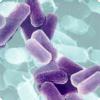 Сколько весят бактерии в кишечнике человека?