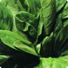 Почему шпинату приписывают завышенную пользу от содержания железа?