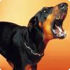 Какую работу выполняла шведка Сив Густавсон, подражавшая лаю собак на улицах?