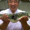 Каким образом японские учёные вывели неядовитую рыбу фугу?