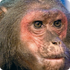 Какую доходность показал инвестиционный портфель, составленный цирковой обезьянкой?