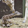 Какие новорожденные падают на землю с двух метров?