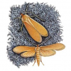 Почему убить бабочку моли недостаточно, чтобы спасти шерстяные вещи?