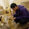 Что можно делать в японских кошачьих кафе?