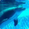 Как дельфины решают проблемы дыхания атмосферным кислородом во время сна?