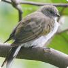 Какие птицы помогают людям искать мёд и почему?