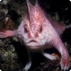 Где живут рыбы, которые любят ходить по дну вместо плавания?