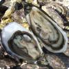Какие моллюски могут менять свой пол несколько раз в течение жизни?