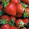 Чем бери самом деле является то, зачем наш брат зовём ягодой земляники?