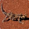 Какое животное может напиться, просто зарывшись во влажный песок?