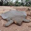 Где обитают черепахи с мягким панцирем?