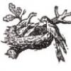 Почему в 1988 году логотип Nestle лишился одного птенца?