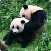 Каких животных природа плохо «спроектировала» для размножения?