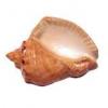 Почему в сувенирной раковине слышен шум моря?