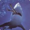 Каково ежегодное соотношение людей, убиваемых акулами, и акул, убиваемых людьми?