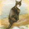 Какое животное выжило на трёх затонувших во Вторую Мировую войну кораблях?