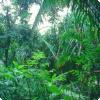 Насколько шумен тропический лес?