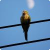 Почему сидящая на проводе птица не погибает от удара током?