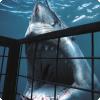 Музыка какой рок-группы привлекает акул?