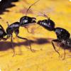 Какие насекомые способны разговаривать, считать и выполнять простейшие арифметические действия?