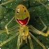 Какие животные на Гавайях имеют окраску в виде улыбающегося человеческого лица?