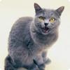 Какой фрукт коммуникации старшие кошки используют исключительно для того привлечения человека?
