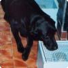 Могут ли собаки измерять канцер возьми ранних стадиях равно каким образом?