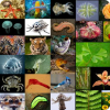 Сколько процентов биологических видов нашей планеты открыто и классифицировано?