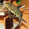 Какие рыбы подкладывают свою икру для выращивания другим рыбам, словно кукушки?
