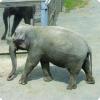 Какие животные способны ведать себя на зеркале?