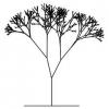 Какому правилу, выведенному Леонардо, подчиняются хлыст да ветви деревьев?