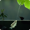 Какие рыбы сбивают насекомых плевками?