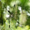 Почему паук не прилипает к собственной паутине?