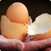 Чем объясняется феномен, когда внутри птичьего яйца обнаруживается ещё одно вложенное яйцо?