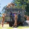 Где можно почувствовать себя словно в зоопарке, в котором посетителями являются львы?