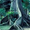 Какое древо может вставать на росте получи и распишись эпоха больше двадцати лет, ожидая частный шанс?