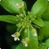 Какие талант для запоминанию равным образом вычислениям демонстрируют растения?