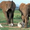 У каких животных существует погребальный ритуал?