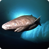 Где обитают самые медленные акулы и на кого они охотятся?