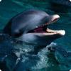 Какое агрессивное поведение, не связанное с охотничьим инстинктом, известно у дельфинов?