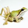 Какие паразиты последовательно заражают улитку, лягушку и птицу, чтобы совершить жизненный цикл?