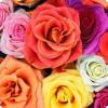 Сколько цветов нужно даровать европейским девушкам?