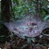 Какое социальное поведение может возникать у пауков?