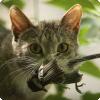 Сколько видов животных на планете исчезли из-за кошек?