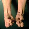 Какие мышцы бери руках отсутствуют у каждого шестого человека?