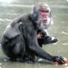 Какие животные научились мылить да подсаливать пищу?