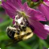 Какую информацию могут вытаскивать пчёлы изо электрического полина цветов?