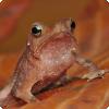 У каких животных некрофилия является распространённой стратегией размножения?
